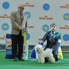 Spencer - BIS Veteran at Kyivska Rus CACIB show